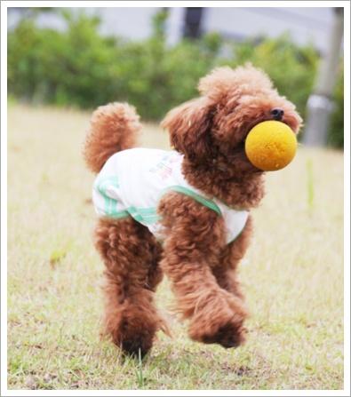 ボール遊び 大好き