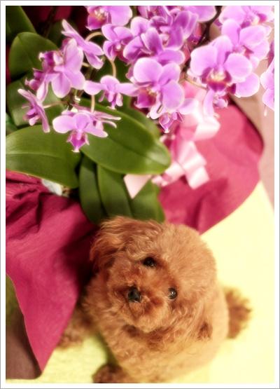 お花と記念写真?