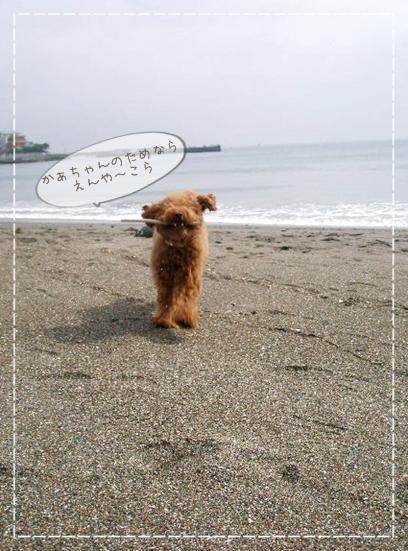 棒を運ぶ犬
