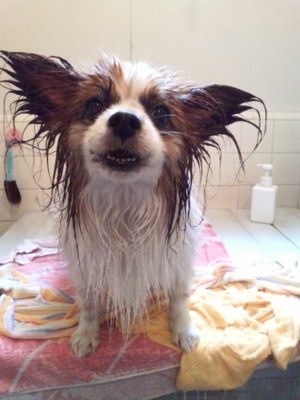 080613 shampoo