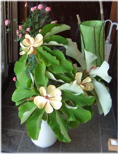ほおおばの花