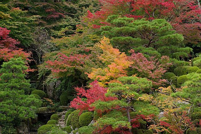 百済寺 喜見院の紅葉