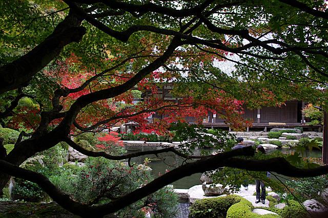 百済寺 喜見院の庭園 松の向こう