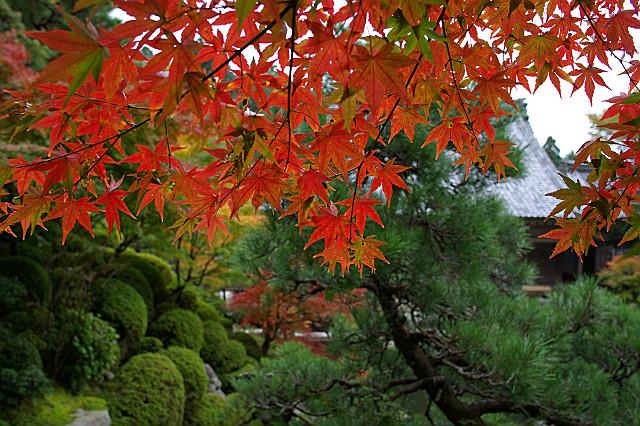 百済寺 喜見院の庭園 モミジの陰から