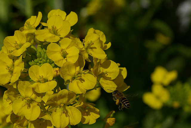 忙しそうな蜂ちゃん