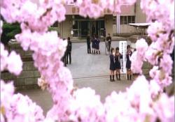 春の卒業式。櫻木高校の゛櫻の園゛
