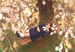 授業サボって、桜の木の下で居眠りしている桃