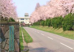 三本木農業高校の櫻の園
