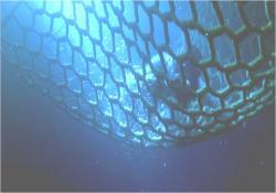 逃亡したアリソン、水中に飛び込み網に捕まえられる