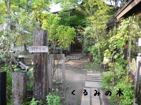 kuruminoki2ーb