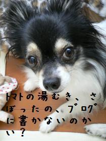 7-11dog.jpg
