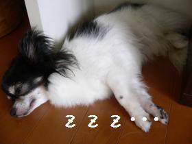 7-24dog-1-b.jpg