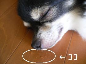 7-24dog-3-b.jpg
