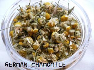 chamomile1.jpg