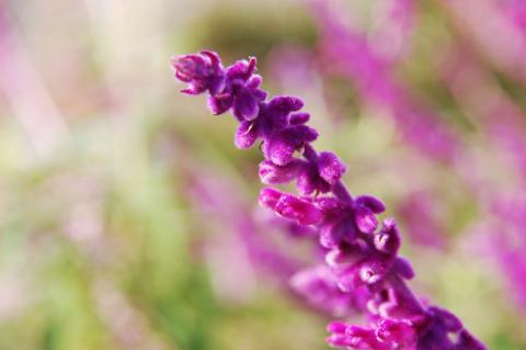 061216_flower.jpg