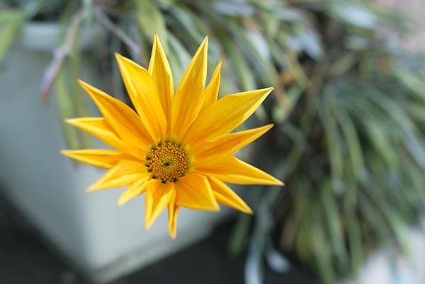 070131_flower24mm.jpg