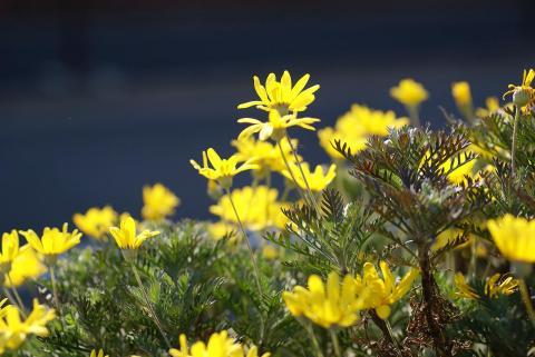 070131_flower70mm02.jpg