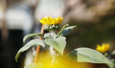 070131_flower70mm04.jpg