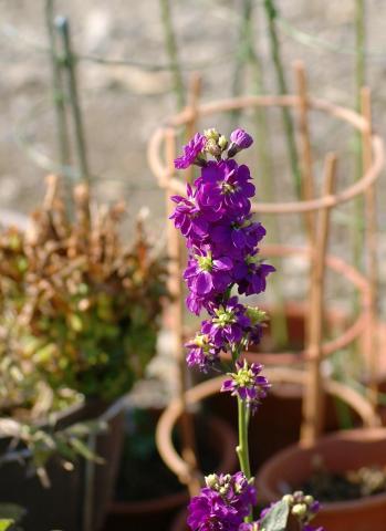 070131_flower70mm.jpg