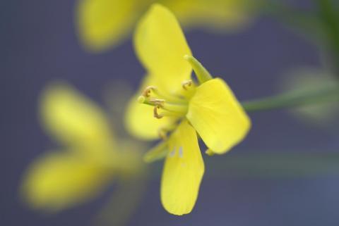 070219_flower2.jpg