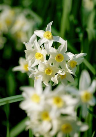 070219_flower4.jpg