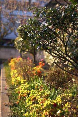 070219_flower6.jpg