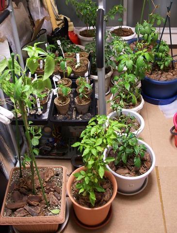 070416_peppers.jpg