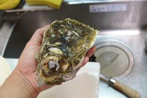 070517_oyster1.jpg
