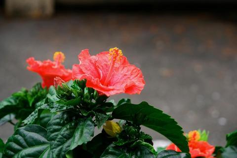 070630_flower.jpg
