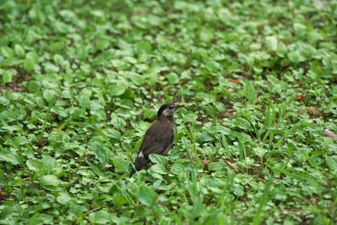 070725_bird1.jpg