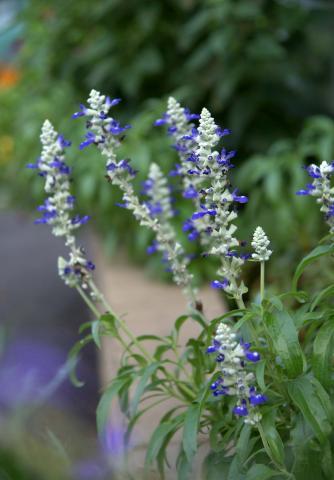 070725_flower1.jpg