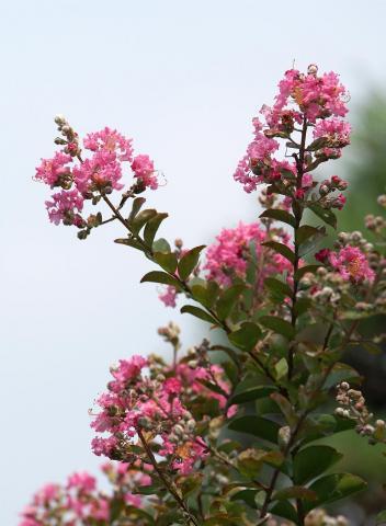 070725_flower2.jpg