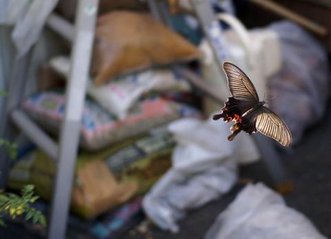 070807_butterfly.jpg