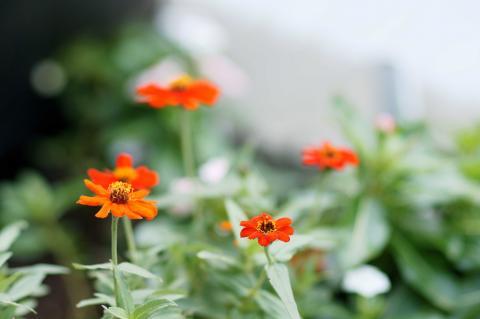 071117_flower1.jpg