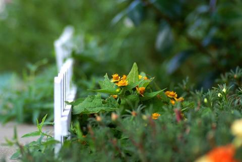 flower0804.jpg