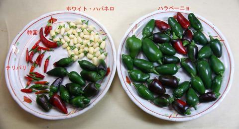 peppers_070920.jpg