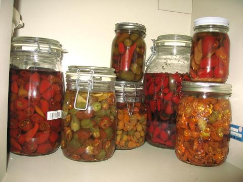 pickles081101.jpg