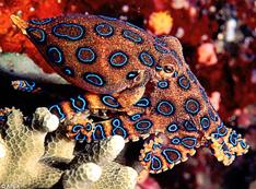 キレイな海の生き物