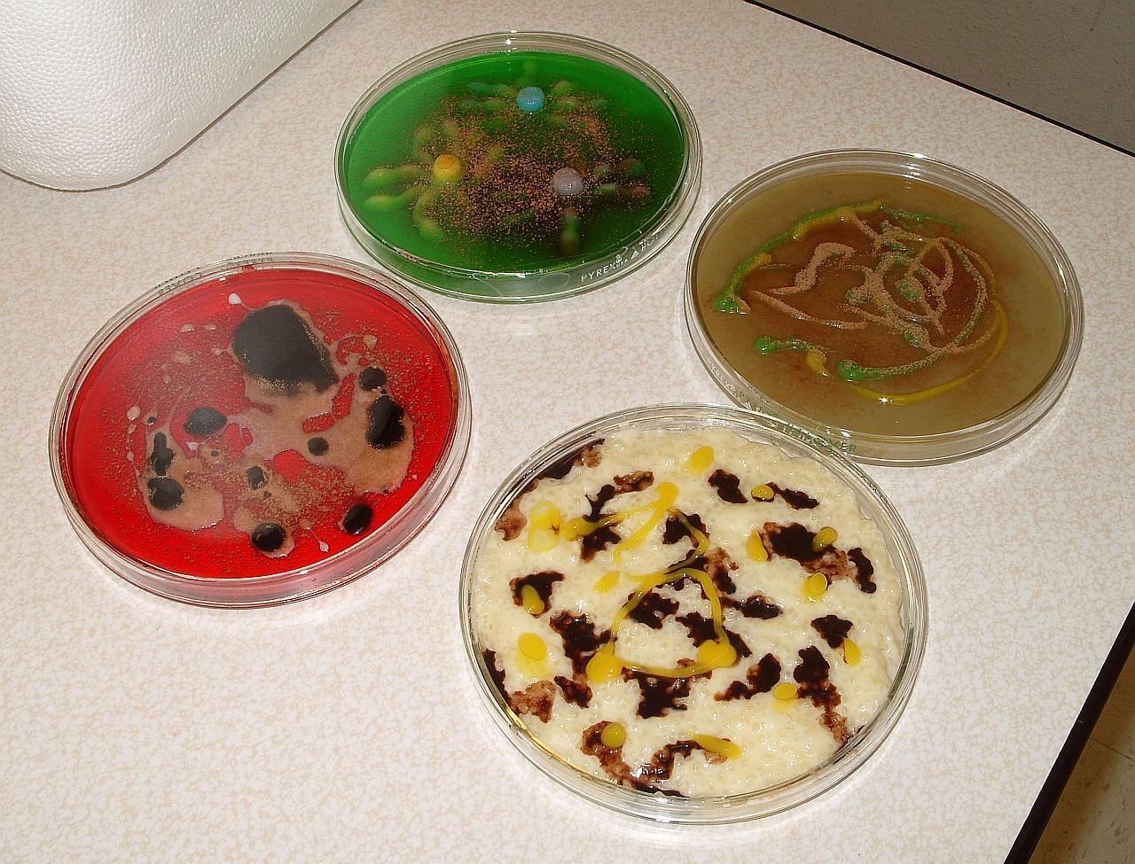 バクテリア・デザート