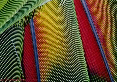 bright-feathers-386745-ga.jpg