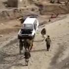 ラクダが車一台を運ぶ