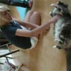 モフモフの猫でモップがけ