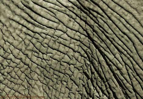 elephant-skin-663376-ga.jpg