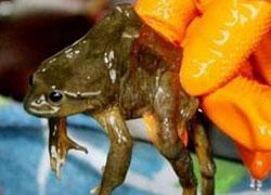 カエルジュース