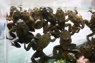 frog_juice_002.jpg
