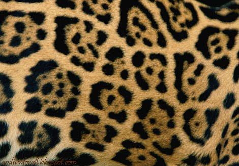 jaguar-coat-682630-ga.jpg