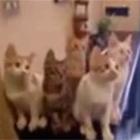 5匹の猫がシンクロ