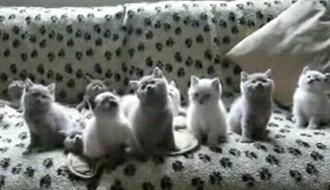 大量の猫がシンクロ
