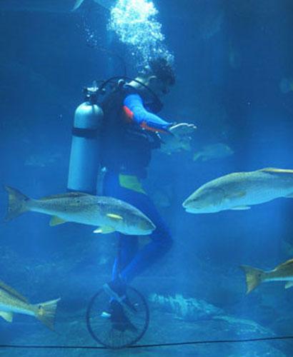 underwater-olympic02.jpg