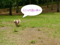 20060507013516.jpg
